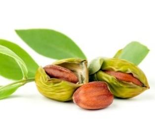 Jojoba seeds