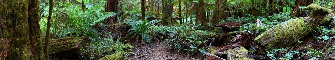 Rainforest panorama