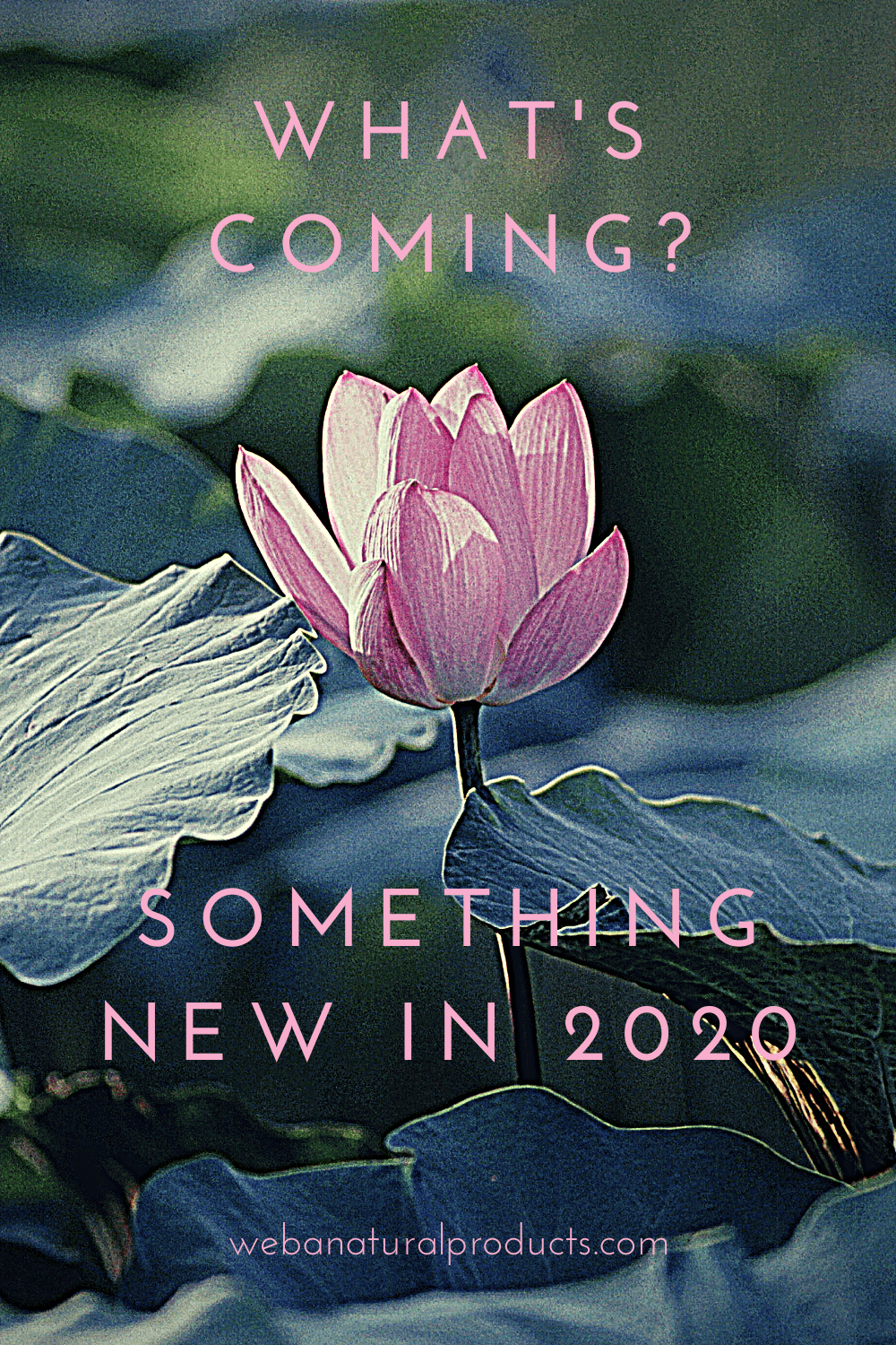 Whats New in 2020 WEBA Natural Products